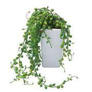 セネシオポット 造花 グリーンインテリア  スプリング&サマーアイテム