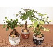 プラントタグウェア ミニ観葉植物/観葉植物/モダン/インテリア/寄せ植え/ガーデニング