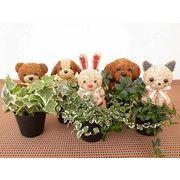 アニマルポットミックス S ミニ観葉植物/観葉植物/モダン/インテリア/寄せ植え/ガーデニング
