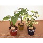 ブリキシャビーウェアM ミニ観葉植物/観葉植物/モダン/インテリア/寄せ植え/ガーデニング