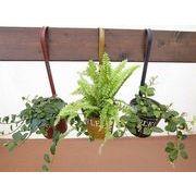レードルブリキロング ミニ観葉植物/観葉植物/モダン/インテリア/寄せ植え/ガーデニング