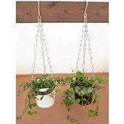ハンギングモノトーンブリキL ミニ観葉植物/観葉植物/モダン/インテリア/寄せ植え/ガーデニング