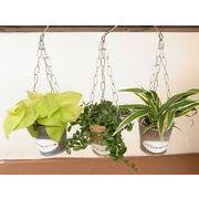 ハンギングブリキ M ミニ観葉植物/観葉植物/モダン/インテリア/寄せ植え/ガーデニング