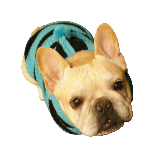 モデル犬服着用写真ブルー