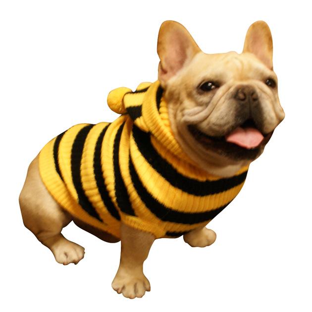 モデル犬服着用写真イエロー