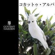 ■コベントガーデン■ コカットゥ・アルバ