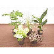 アニマルポットミックス ミニ観葉植物/観葉植物/モダン/インテリア/寄せ植え/ガーデニング