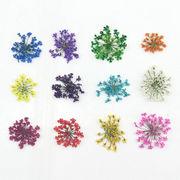 10枚セット ドライフラワー 押し花 選べる12色 UVレジン封入花材 3Dネイル 爪先を可愛く演出