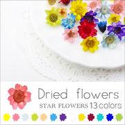 ネイル 新色追加♪ スターフラワー ガラスドームに【生花を使用したドライフラワー13色】約10個入り