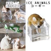 ■キーストーン■■2020SS 先行予約■ ICE ANIMALS コーギー