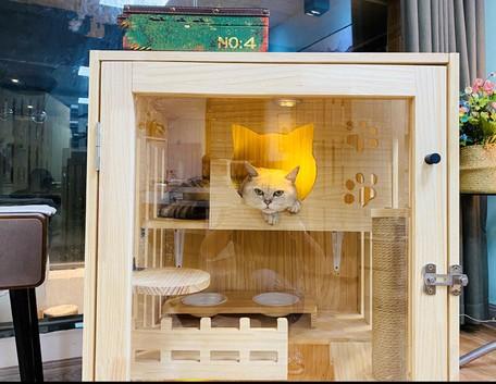 猫の別荘 実木猫のハウス/猫棚/猫ケージ/豪華 単階猫のクライミング棚 猫の巣LDLB568
