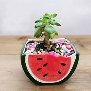 スイカの植木鉢多肉ミニ飾り植木鉢ZJEB453
