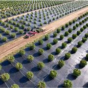 長さ600m/750m雑草害虫防止シート マルチフィルム 全生物分解 黒/白マルチ フィルム マルチシート 農業用